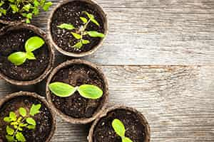 5 Tips for Moving Plants and Garden Vegetables