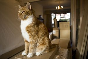 Tips to Keep Your Pet Safe during a Long Distance Move