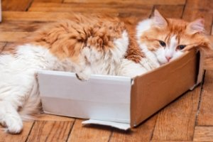 3 Tips for Moving with Cats