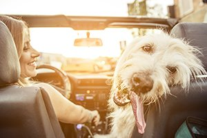 5 Tips from the Experts for Moving with Pets