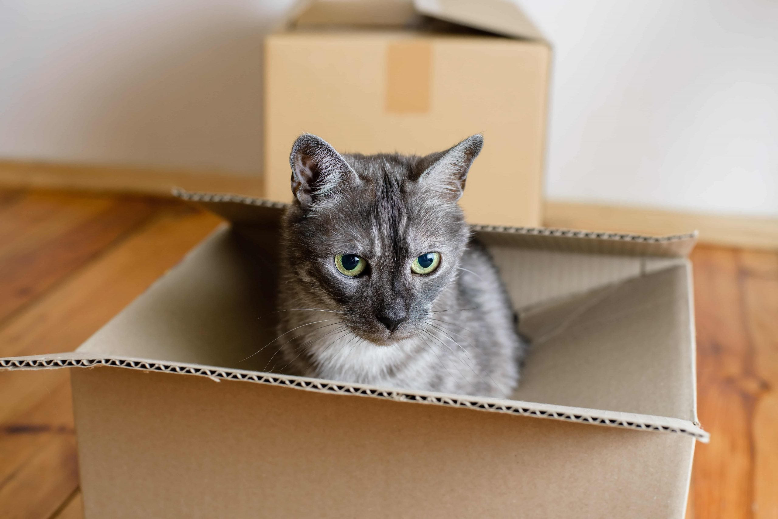 3 Tips for Moving with Pets